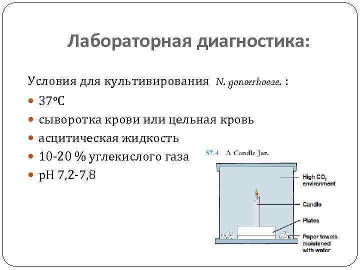 Лабораторная диагностика: Условия для культивирования N. gonorrhoeae. : 37 о. С сыворотка крови или