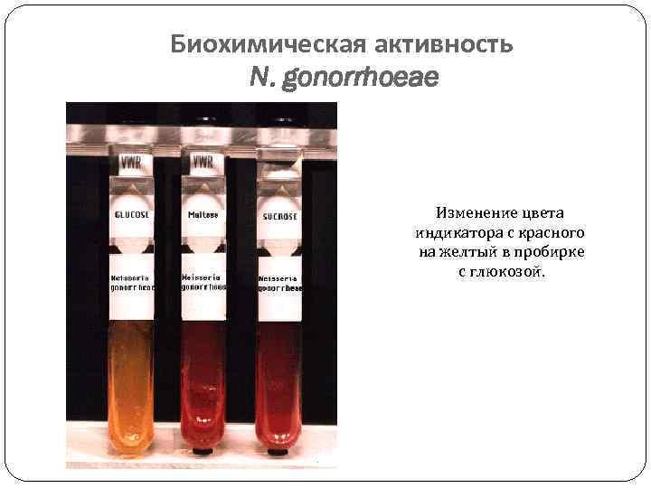Биохимическая активность N. gonorrhoeae Изменение цвета индикатора с красного на желтый в пробирке с