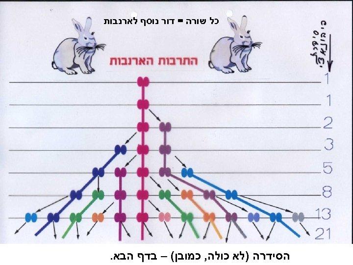 כל שורה = דור נוסף לארנבות הסידרה )לא כולה, כמובן( – בדף הבא.