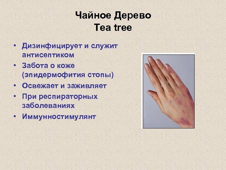 Чайное Дерево Tea tree • Дизинфицирует и служит антисептиком • Забота о коже (эпидермофития
