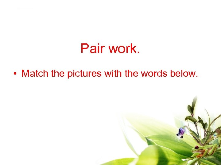 Pair work. • Match the pictures with the words below.