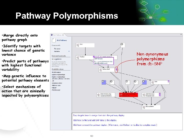 Pathway Polymorphisms • Merge directly onto pathway graph • Identify targets with lowest chance