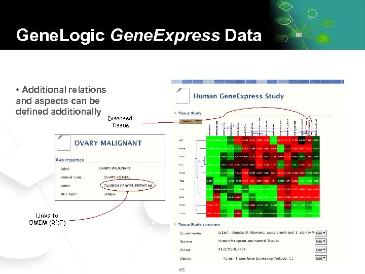 Gene. Logic Gene. Express Data • Additional relations and aspects can be defined additionally