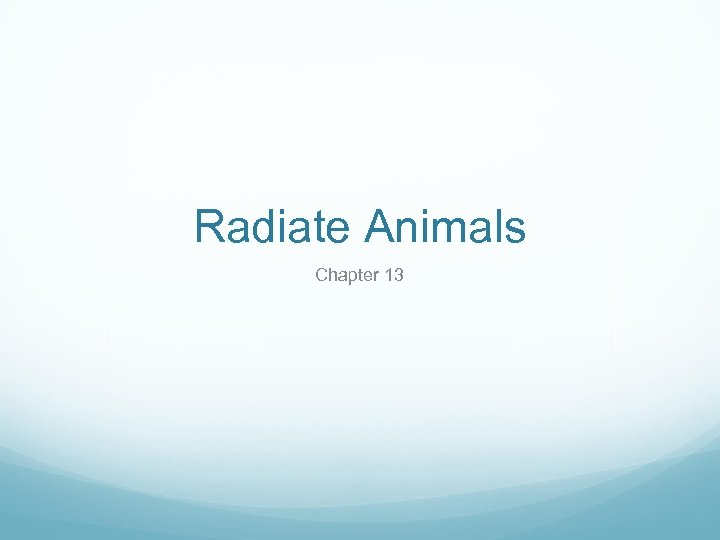 Radiate Animals Chapter 13