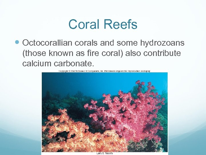 Coral Reefs Octocorallian corals and some hydrozoans (those known as fire coral) also contribute