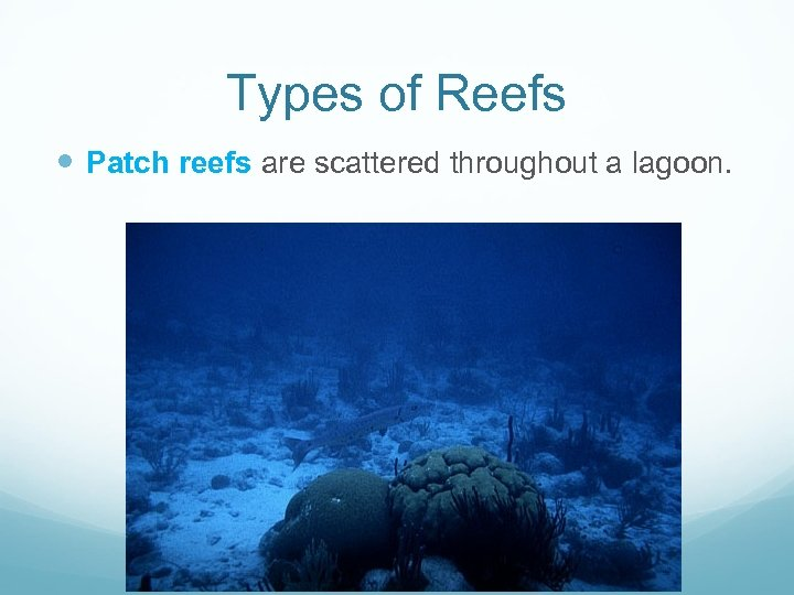 Types of Reefs Patch reefs are scattered throughout a lagoon.