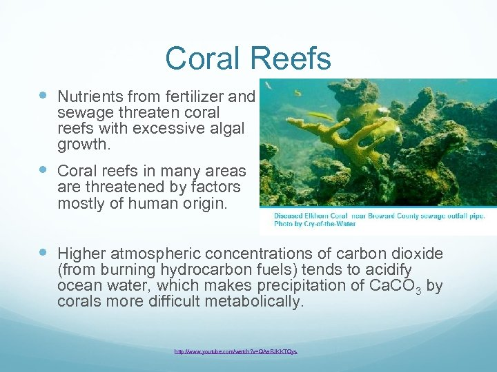 Coral Reefs Nutrients from fertilizer and sewage threaten coral reefs with excessive algal growth.