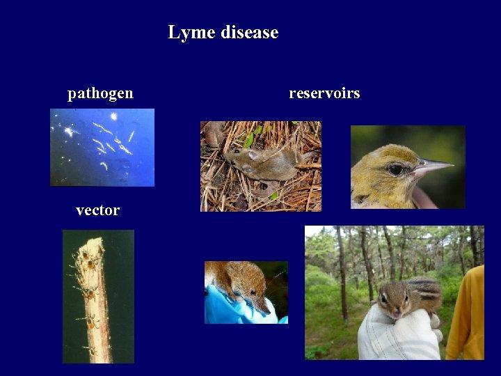 Lyme disease pathogen vector reservoirs