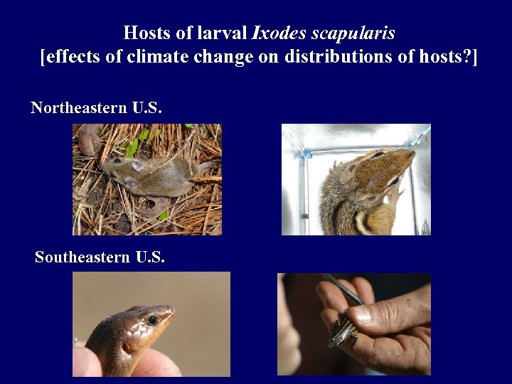 Hosts of larval Ixodes scapularis [effects of climate change on distributions of hosts? ]