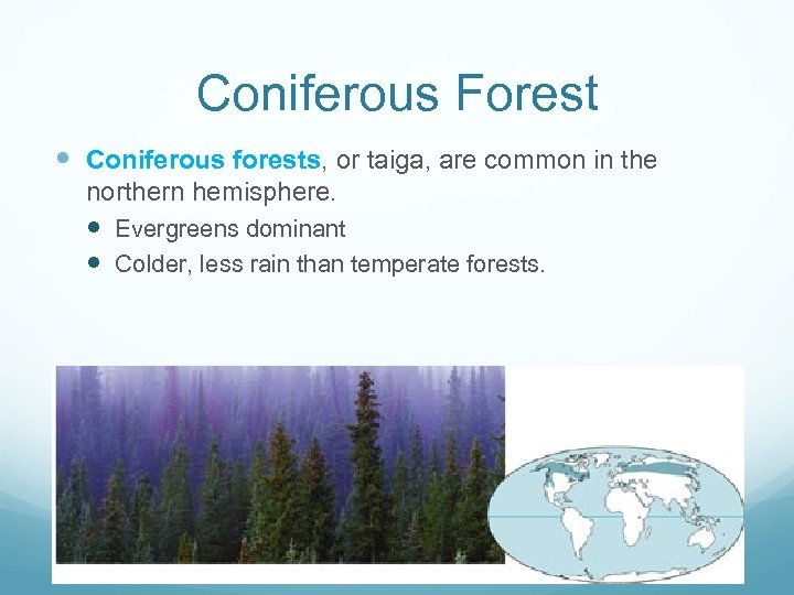 Coniferous Forest Coniferous forests, or taiga, are common in the northern hemisphere. Evergreens dominant