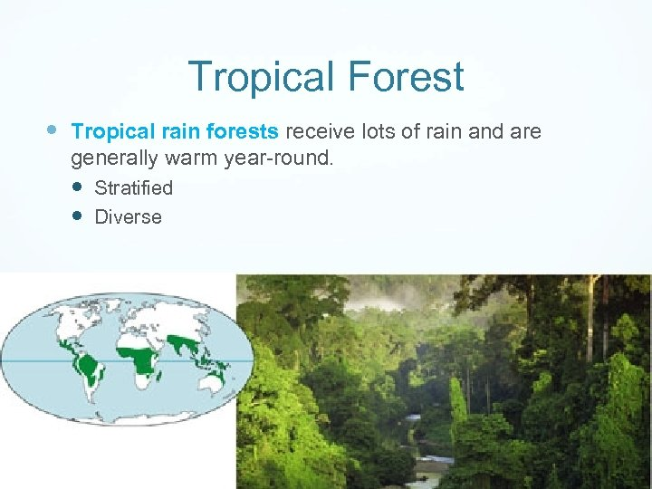 Tropical Forest Tropical rain forests receive lots of rain and are generally warm year-round.
