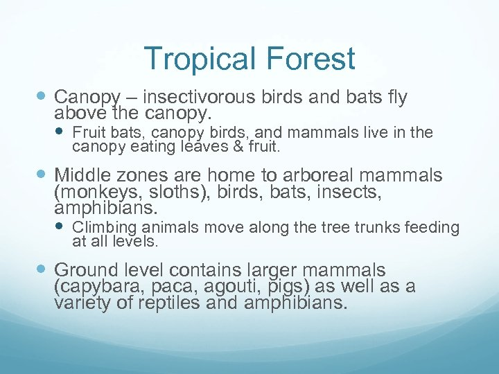 Tropical Forest Canopy – insectivorous birds and bats fly above the canopy. Fruit bats,