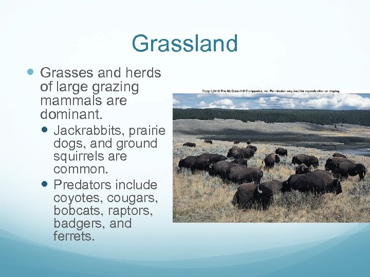 Grassland Grasses and herds of large grazing mammals are dominant. Jackrabbits, prairie dogs, and