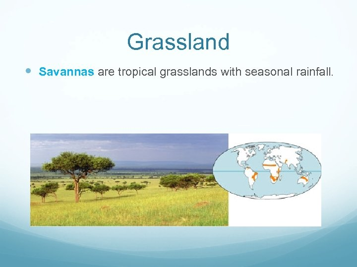 Grassland Savannas are tropical grasslands with seasonal rainfall.