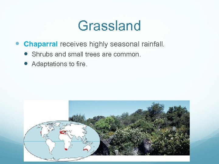 Grassland Chaparral receives highly seasonal rainfall. Shrubs and small trees are common. Adaptations to