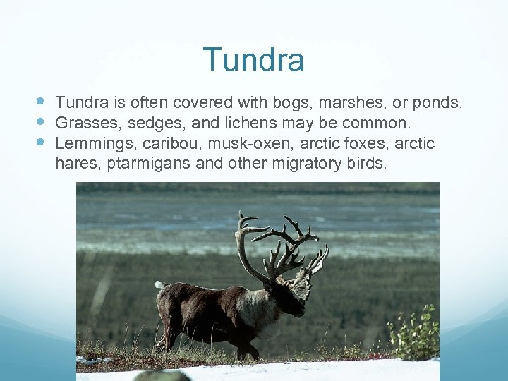 Tundra is often covered with bogs, marshes, or ponds. Grasses, sedges, and lichens may