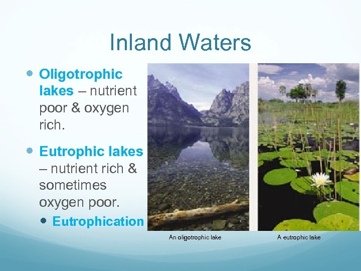 Inland Waters LAKES Oligotrophic lakes – nutrient poor & oxygen rich. Eutrophic lakes –
