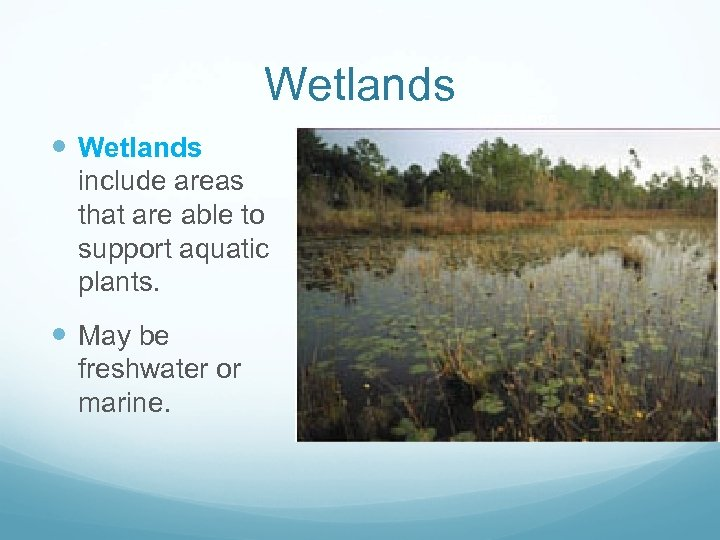 Wetlands WETLANDS Wetlands include areas that are able to support aquatic plants. May be
