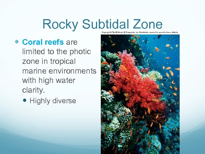 Rocky Subtidal Zone CORAL REEFS Coral reefs are limited to the photic zone in