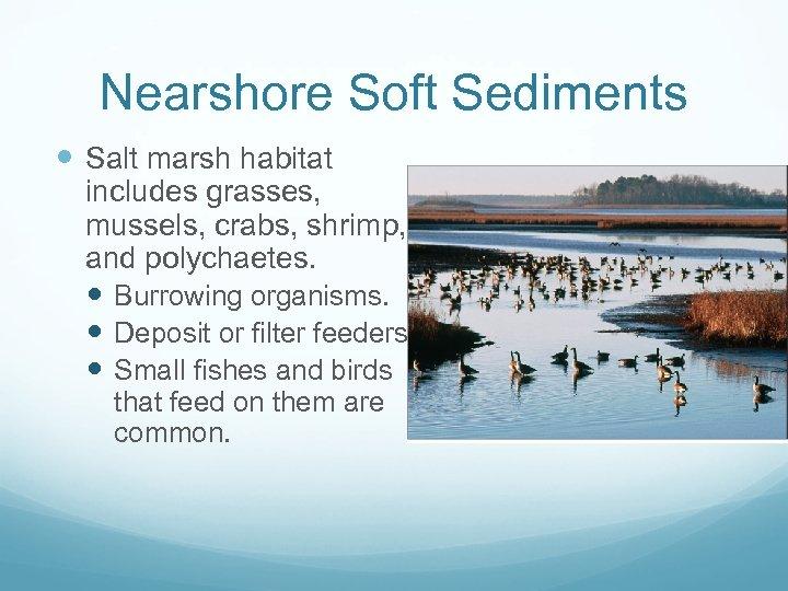 Nearshore Soft Sediments Salt marsh habitat includes grasses, mussels, crabs, shrimp, and polychaetes. Burrowing