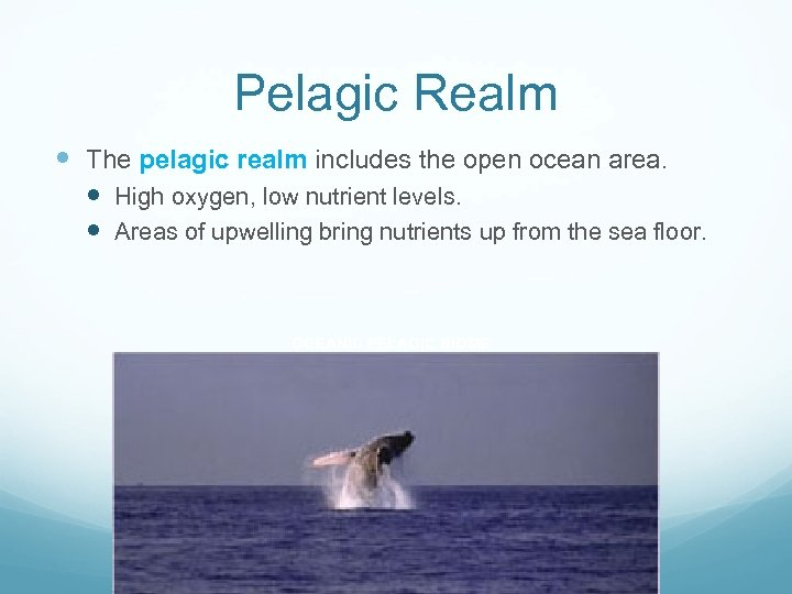Pelagic Realm The pelagic realm includes the open ocean area. High oxygen, low nutrient