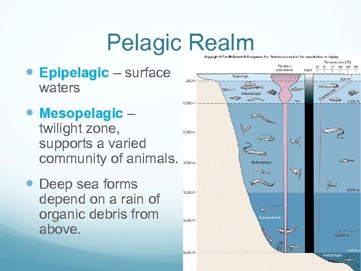 Pelagic Realm Epipelagic – surface waters Mesopelagic – twilight zone, supports a varied community