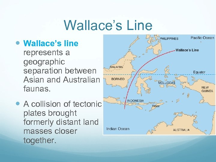 Wallace's Line Wallace's line represents a geographic separation between Asian and Australian faunas. A