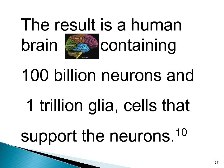 The result is a human brain containing 100 billion neurons and 1 trillion glia,