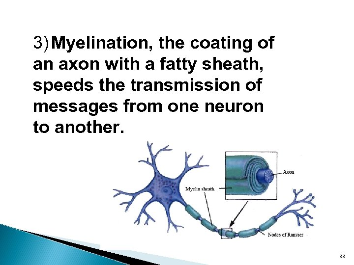 3) Myelination, the coating of an axon with a fatty sheath, speeds the transmission