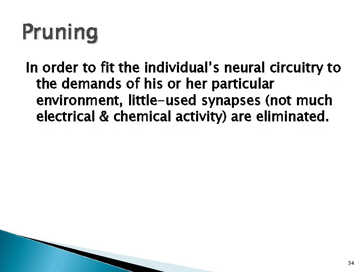 Pruning In order to fit the individual's neural circuitry to the demands of his
