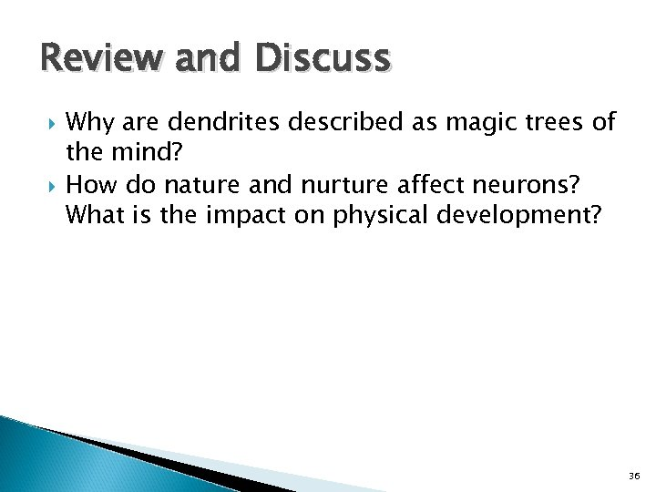 Review and Discuss Why are dendrites described as magic trees of the mind? How
