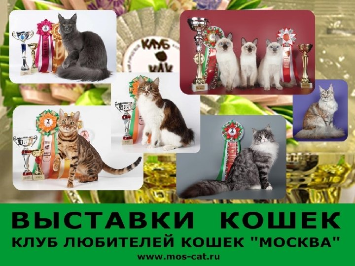 клуба любителей кошек москва