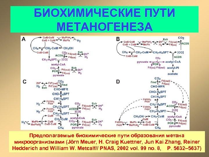 БИОХИМИЧЕСКИЕ ПУТИ МЕТАНОГЕНЕЗА Предполагаемые биохимические пути образования метана микроорганизмами (Jörn Meuer, H. Craig Kuettner,