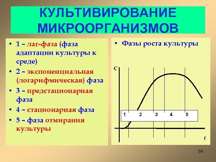 КУЛЬТИВИРОВАНИЕ МИКРООРГАНИЗМОВ • 1 – лаг-фаза (фаза адаптации культуры к среде) • 2 –