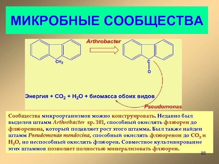 МИКРОБНЫЕ СООБЩЕСТВА Сообщества микроорганизмов можно конструировать. Недавно был выделен штамм Arthrobacter sp. 101, способный