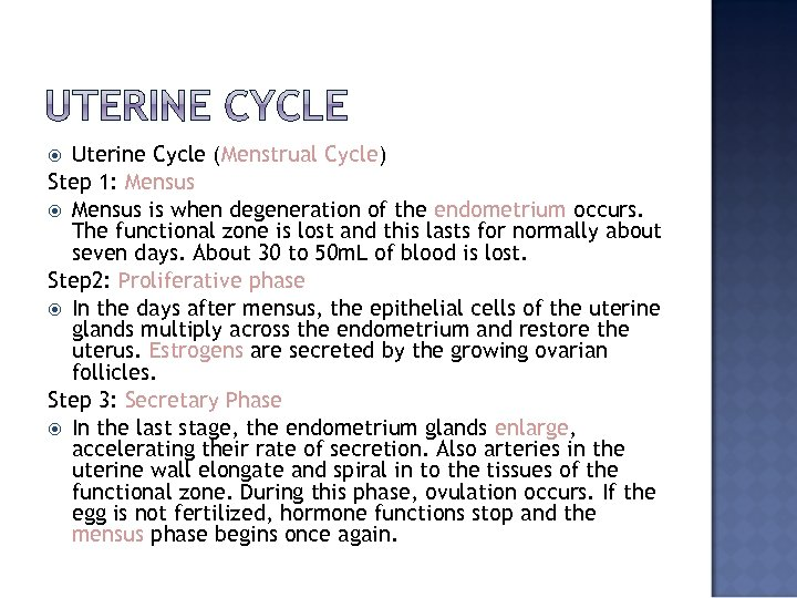 Uterine Cycle (Menstrual Cycle) Step 1: Mensus is when degeneration of the endometrium occurs.