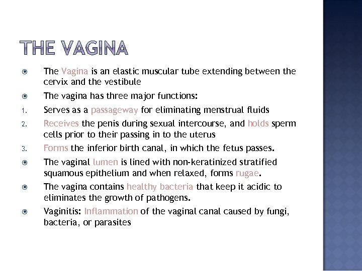 The Vagina is an elastic muscular tube extending between the cervix and the