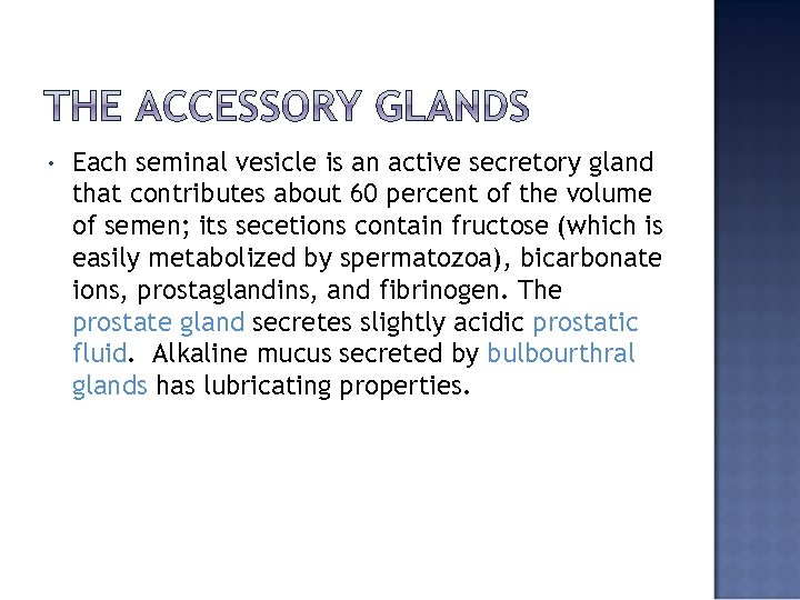 • Each seminal vesicle is an active secretory gland that contributes about 60