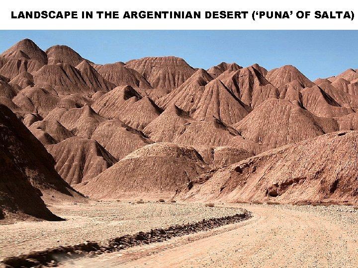 LANDSCAPE IN THE ARGENTINIAN DESERT ('PUNA' OF SALTA)