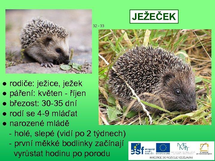 JEŽEČEK 32 - 33 ● rodiče: ježice, ježek ● páření: květen - říjen ●