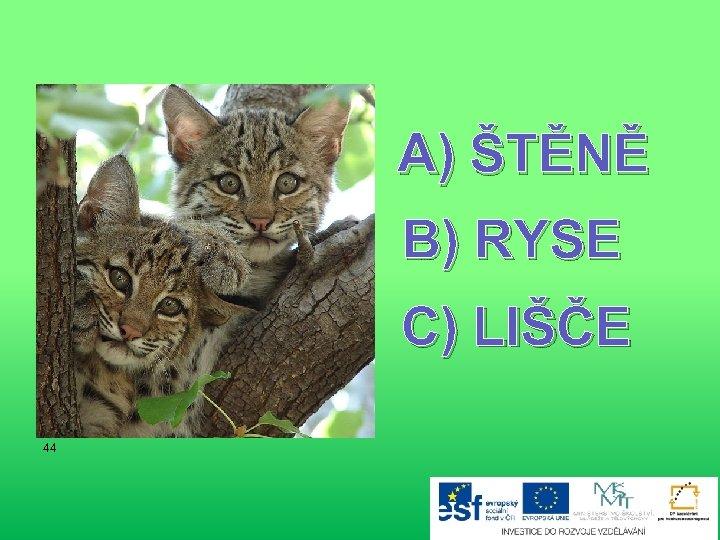 A) ŠTĚNĚ B) RYSE C) LIŠČE 44