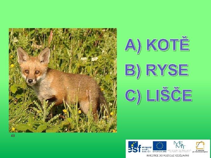 A) KOTĚ B) RYSE C) LIŠČE 48