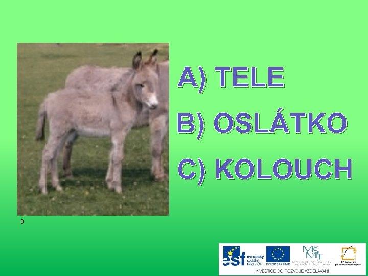 A) TELE B) OSLÁTKO C) KOLOUCH 9