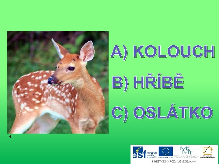A) KOLOUCH B) HŘÍBĚ C) OSLÁTKO 41
