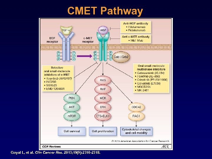 CMET Pathway Goyal L, et al. Clin Cancer Res. 2013; 19(9): 2310 -2318.