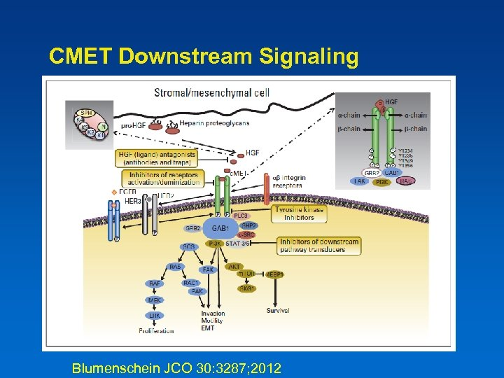 CMET Downstream Signaling Blumenschein JCO 30: 3287; 2012