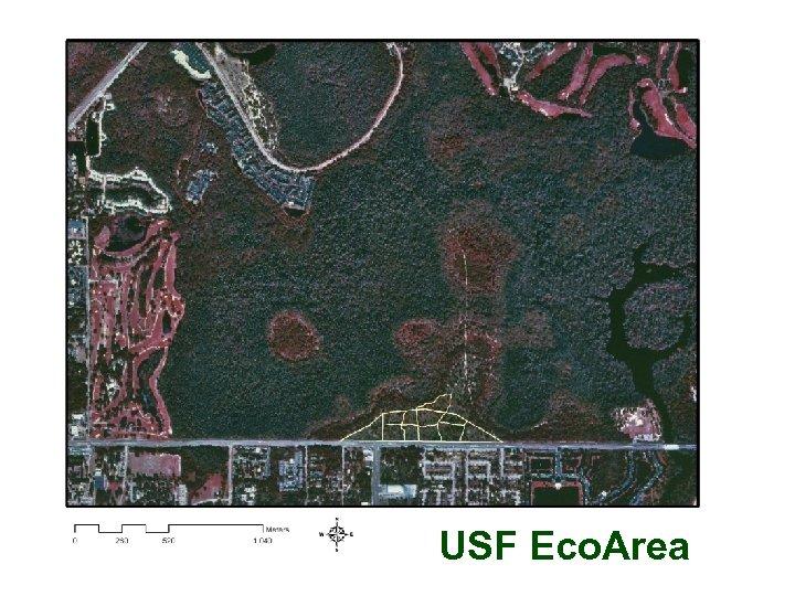 USF Eco. Area
