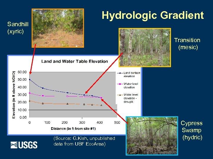Sandhill (xyric) Hydrologic Gradient Transition (mesic) (Source: G. Kish, unpublished data from USF Eco.