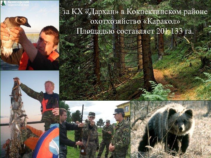 за КХ «Дархан» в Кокпектинском районе охотхозяйство «Каракол» Площадью составляет 201 133 га.