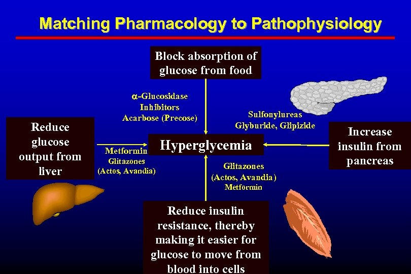 Matching Pharmacology to Pathophysiology Block absorption of glucose from food Reduce glucose output from